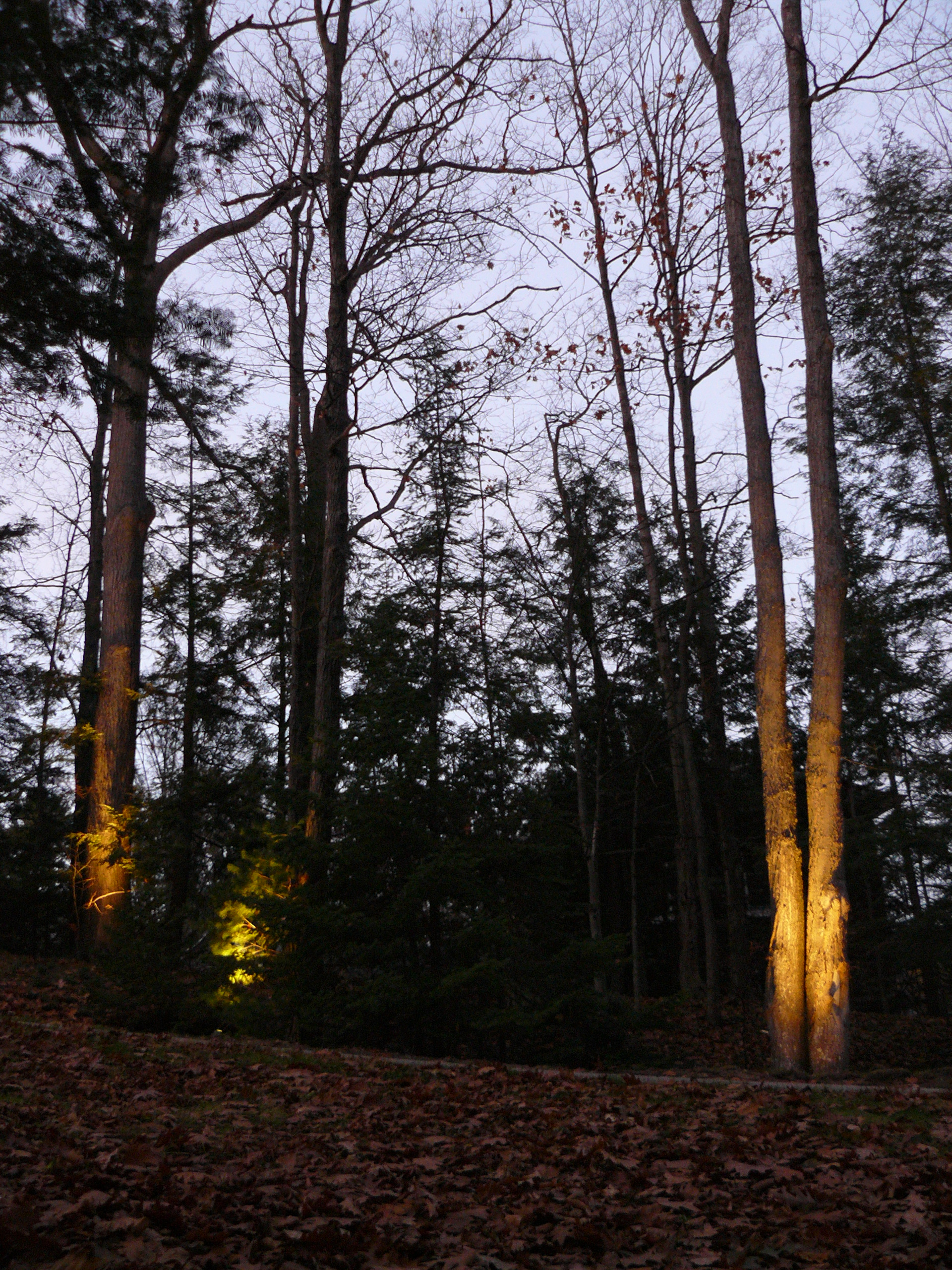 Landscape Lighting Project in Harbor Springs | Select Electric Company